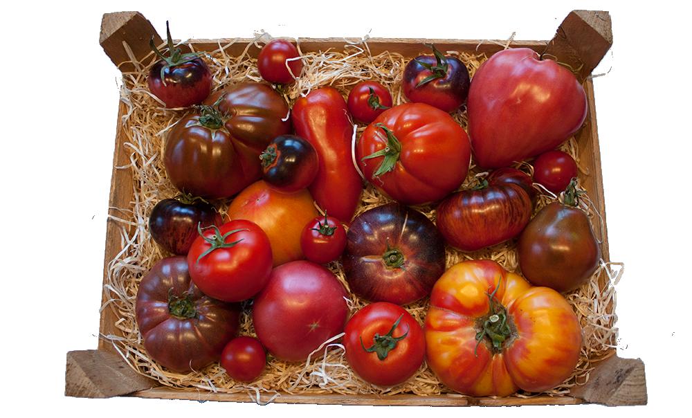 Gogeffs bunte Tomatenkiste